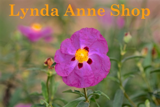 Lynda Anne Shop