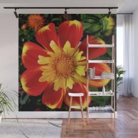 sunburst-zinnia-wall-murals