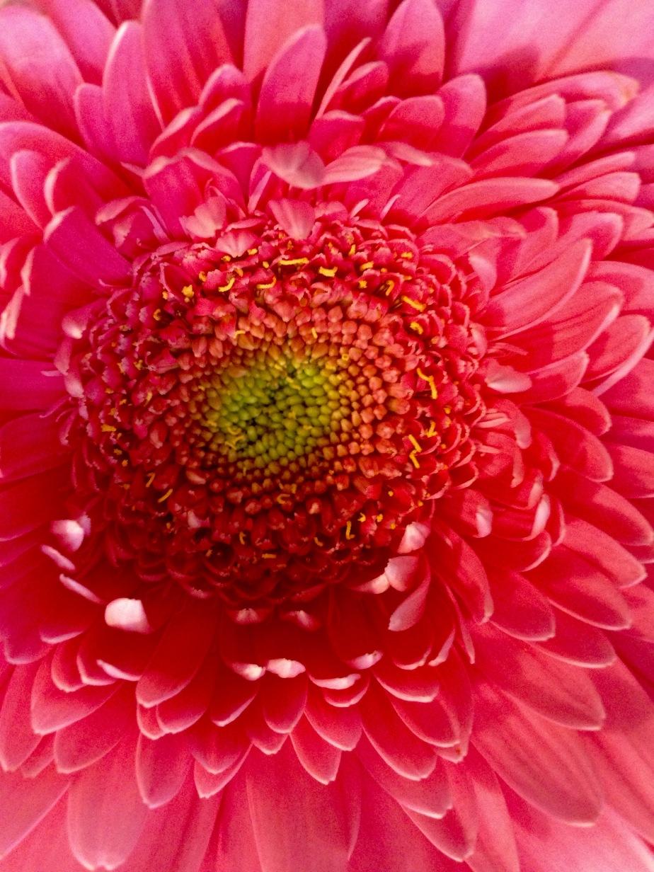 Sunday Funday Flowers